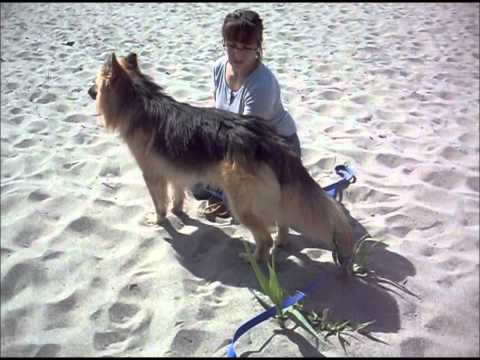 Animalinneed: Video of Turco, magnificent dog