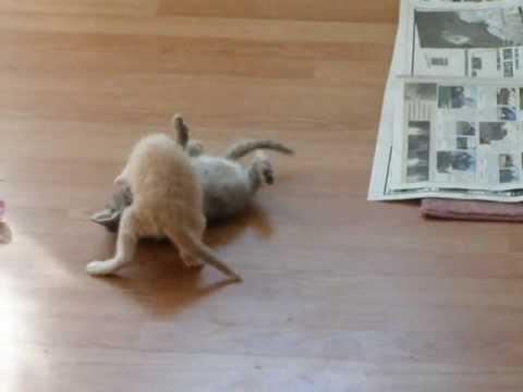 Male mace se tuku