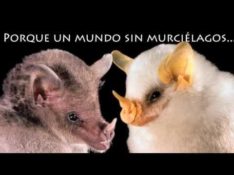 Necesitamos a los murciélagos y ellos nos necesitan