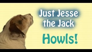Just Jesse the Jack Howls! (A Just Jesse Moment)
