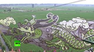 Creative Farm': Rice fields become live painting in China - RUSSIATODAY