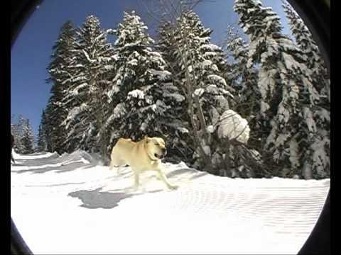 Upoznajte Vispera - psa koji obožava sneg