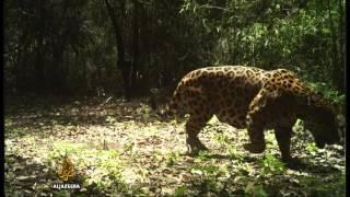 Ecuador's thirst for oil threatens wildlife - ALJAZEERAENGLISH