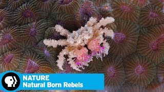 "NATURE | Natural Born Rebels, Episode 2: ""Survival"" 