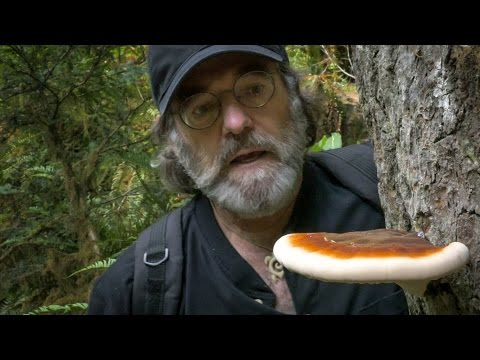 Could The Mushroom Save The Honeybee?