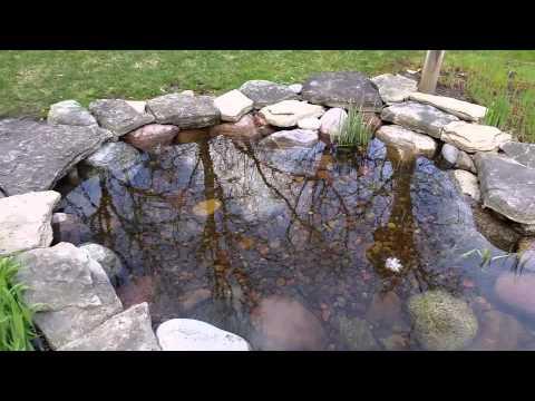 A Fresh Clean Pond