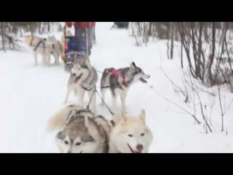 Dog sledding or sled dogging?