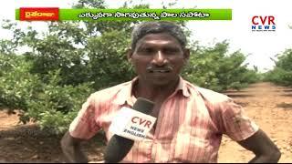 Sapota Farming | Srikakulam Dist | Raithe Raju | CVR News - CVRNEWSOFFICIAL