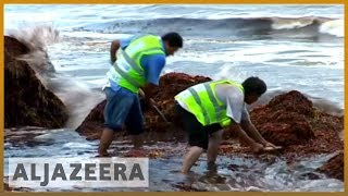 🇺🇸 Red tide: Toxic algae bloom plagues Florida's coastline | Al Jazeera English - ALJAZEERAENGLISH