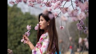 These pictures of China's Cherry Blossoms will mesmerize you! - ABPNEWSTV