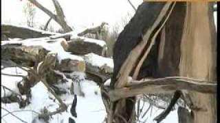 Вырубка Ивановского бора возле Энергодара
