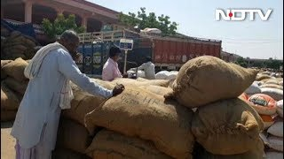 MSP बढ़ने के बावजूद किसान कम भाव पर बाजरा बेचने को मजबूर - NDTVINDIA
