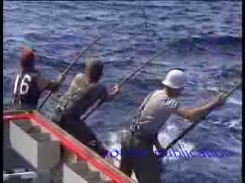 Tuna fishing 85 Port Lincoln 150 kg plus fish biggest seen in my years fishing