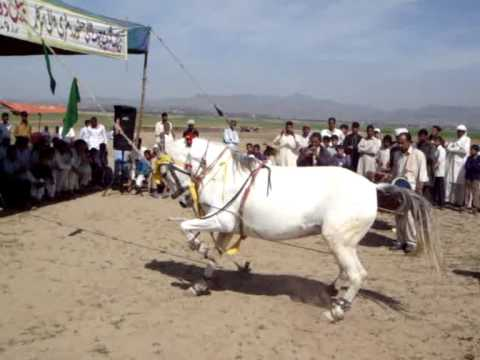 Horse dance HD best video on You Tube