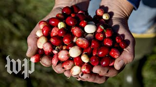 Could cranberries have health benefits for women? - WASHINGTONPOST