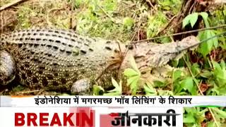 Deshhit: 300 crocodiles mob lynched in Indonesia - ZEENEWS