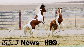 For Wild Horses, It's Ride Or Die: VICE News Tonight on HBO (Full Segment) - VICENEWS