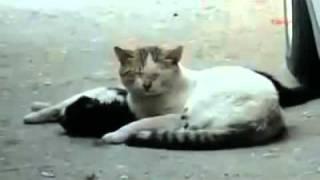 bilang wow donk kalo kau kasihan melihat kucing ini