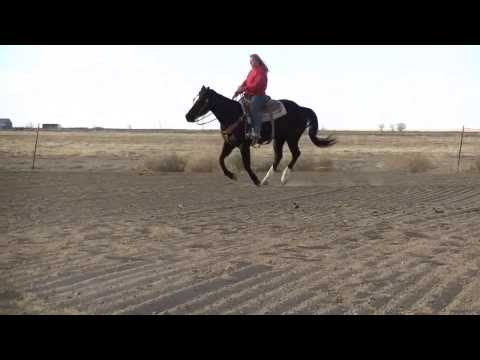 Lena Ropn Casino - *For Sale $6500* 2008 AQHA Black Gelding. Started Team Roping Head horse