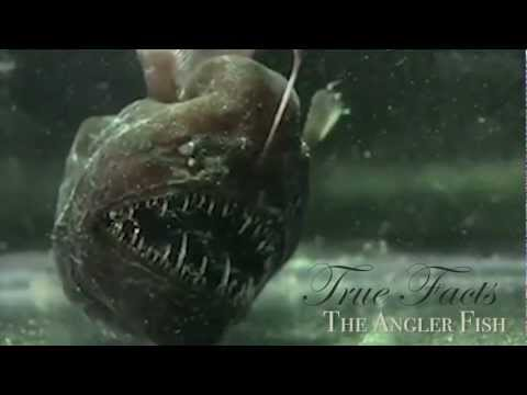 True Facts About The Angler Fish