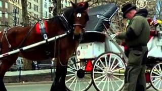 Ньюйоркцев хотят лишить конных прогулок