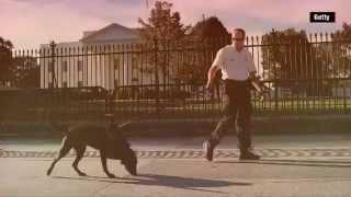 شاهد بالفيديو.. «الإعصار و جوردن» كلبان في حراسة «أوباما»
