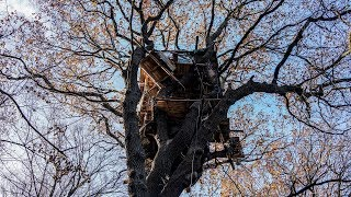 Protesting Coal Mining From a Treehouse - THENEWYORKTIMES