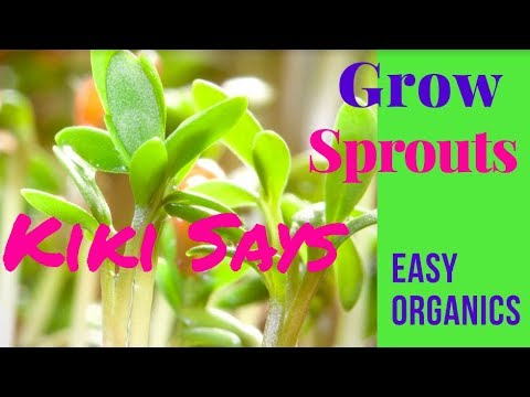 Grow Your Own Sprouts - Live Foods Are Alive!