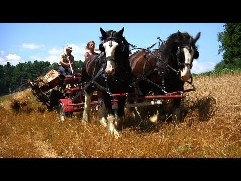 Green Mountain Draft Horse Field Day [SIV 233]