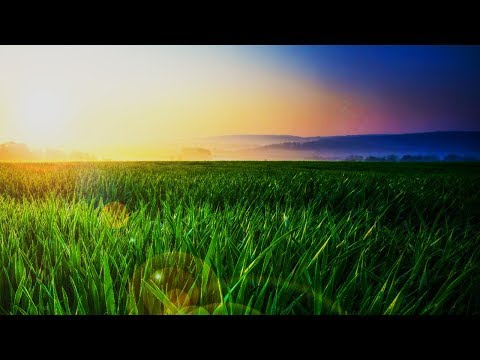 Mindfulness Relaxing Music for Stress Relief. Healing Piano Music for Meditation, Sleep, Spa - صوت وصوره لايف