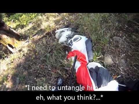 Paragliding vs Eagle (English Version) / Extreme Paraglider Bird Strike Accident