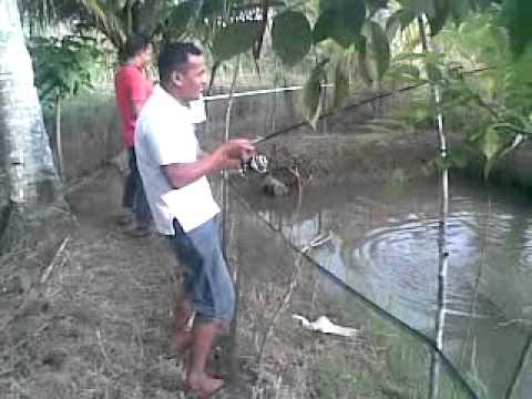 Memancing Ikan Air Tawar (Freshwater Fishing)