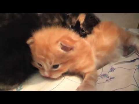 Nornie & Her Kittens – Vlog #3