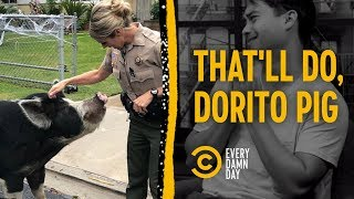 Dorito Pig Steals Everyone's Heart - Every Damn Day - COMEDYCENTRAL