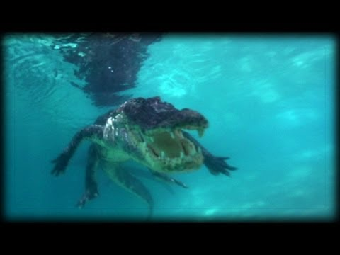 Swimming with Alligators 01 - Ojatro Behind The Scene