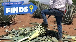 How Tequila Is Made | Food Network Finds - FOODNETWORKTV