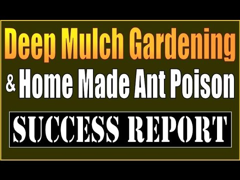DEEP MULCH GARDENING & HOMEMADE ANT POISON. SUCCESS REPORT.