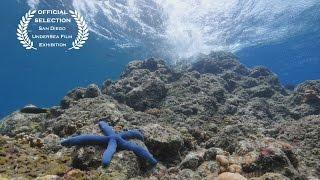 اكتشاف كائنات بحرية غريبة في أعماق البحار