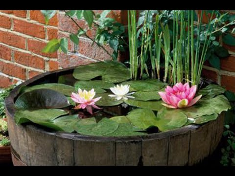 An Easy Water Garden Try A Pond In A Pot