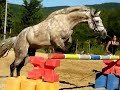 *PONEY SAUT EN LIBERTE* My Killerig Joey
