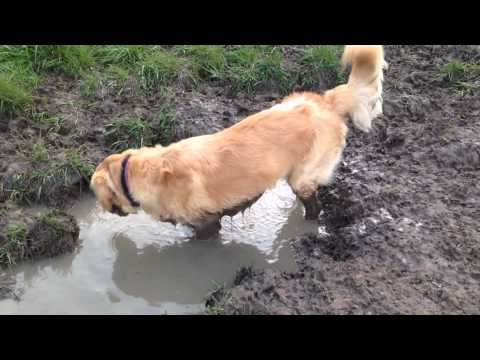 Rory in mud puddle