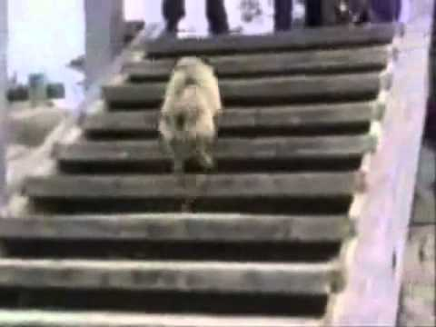 Try not to laugh. Best Animals Fail & Wins Compilation Ever Funny Hahahah