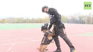 Police dog competition held in China - RUSSIATODAY