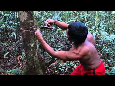 Sobreviviencia na Selva Amazonia Indio Tatuyo Amazonas Indian Jungle Amazon Brasil Brazil 4)