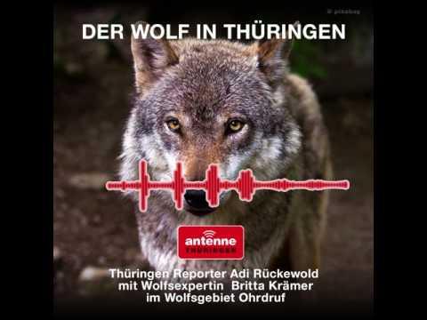 Der Wolf in Thüringen