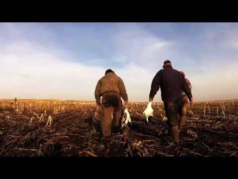 Snow Goose Hunting 2013 South Dakota