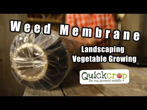 Weed Membrane for Landscaping - Vegetable Growing