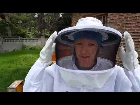 BEGINNING BEEKEEPING: Great Tips & Lots of Bees To See