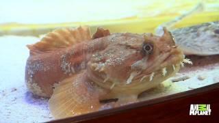 Anthony Davis Has A New Tank Full Of Exotic Fish   Tanked - ANIMALPLANETTV