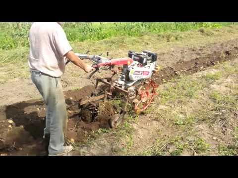 Motocultor diesel Kipor KDT 910 E, la scos de cartofi